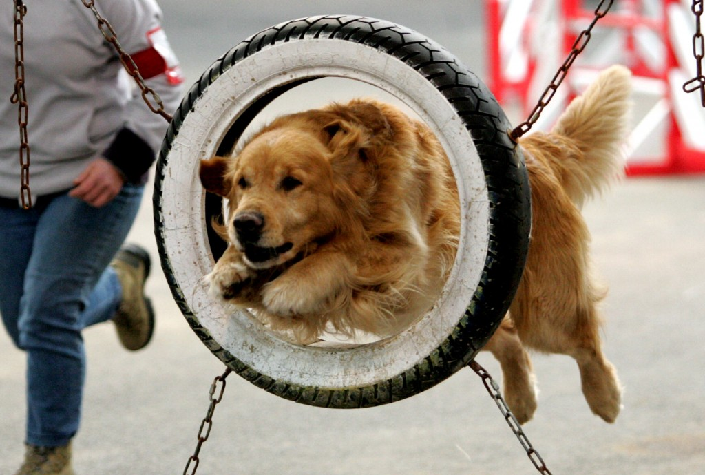 Saxo pneu