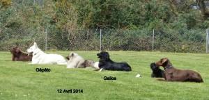 Gépéto et Galice à l'absence.