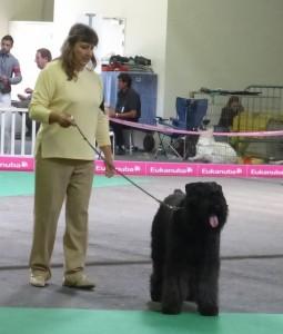 Krokus présenté par son éleveuse Conchi Valenti Ibanez