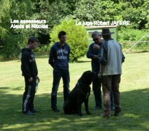 présentation du chien