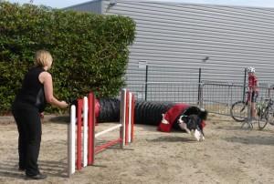 La joie des chiens a donné envie à plusieurs de découvrir la discipline.