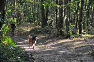 La chienne prend un chemin, est-ce le bon ? ! ! !