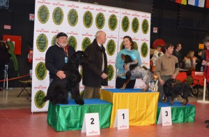 7 Février 2015 - Griot et Bernard, à la Spéciale de Race de Troyes, sur le podium des chiens de Travail.