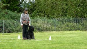 Krokus et Chantal - Carré : 8 /10 - Le chien a bien fait, c'est la maîtresse qui a eu un geste parasite.