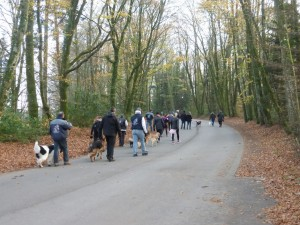 Après plus de 7 km de circuit et à peine deux heures, les randonneurs à deux et quatre pattes ne sont plus très loin de l'arrivée.